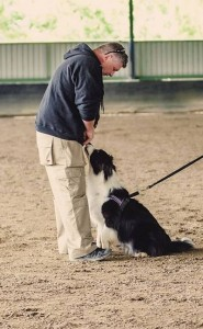 dog behaviourist Sydney