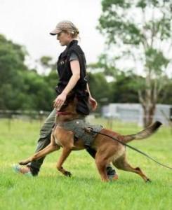 dogsports
